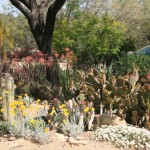 Aloes and cacti