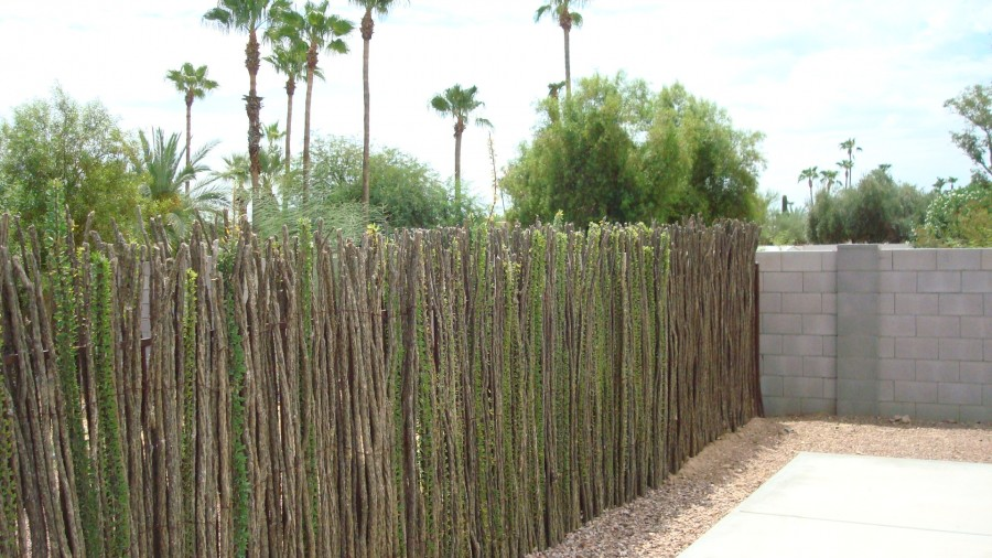 Ocotillo Cactus Fence Related Keywords &...