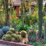 The great advantage for this type of garden is that you rarely have to water these plants!
